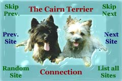 Cairn terrier Connection Webring